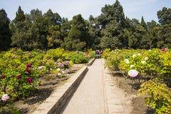 Azja Chiny, Pekin, Jingshan wzgórza park, wiosny landscapeï ¼ ŒPeony ogrodowy festiwal Zdjęcia Stock