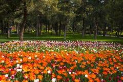 Azja Chiny, Pekin, Jingshan wzgórza park, wiosny landscapeï ¼ ŒTulip ogrodowy festiwal Zdjęcia Royalty Free