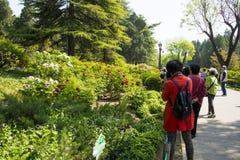 Azja Chiny, Pekin, Jingshan wzgórza park, wiosny landscapeï ogrodowy ¼ Œ Zdjęcia Stock