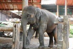 Azja dziecka słoń zdjęcia royalty free