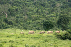 Azja dziki elephent przy Kui Buri narodu parkiem, Prachuabkirikhan Pro Obrazy Royalty Free