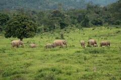 Azja dziki elephent przy Kui Buri narodu parkiem, Prachuabkirikhan Pro Zdjęcia Stock