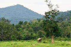 Azja dziki elephent przy Kui Buri narodu parkiem, Prachuabkirikhan Pro Zdjęcie Stock