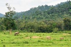 Azja dziki elephent przy Kui Buri narodu parkiem, Prachuabkirikhan Pro Obraz Royalty Free