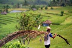 AZJA INDONEZJA BALI krajobraz RICEFIELD Zdjęcia Stock