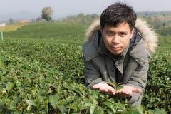Azja mężczyzna w herbacianej plantaci Zdjęcia Royalty Free