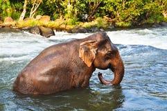 Azja słoń Zdjęcia Royalty Free