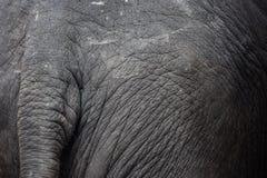 Azja słonie, słonie Obraz Royalty Free