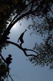 AZJA SOUTHEASTASIA LAOS LUANG PRABANG Zdjęcie Stock