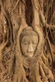 AZJA TAJLANDIA AYUTHAYA WAT PHRA MAHATHAT kamienia głowa Obrazy Royalty Free