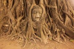 AZJA TAJLANDIA AYUTHAYA WAT PHRA MAHATHAT kamienia głowa Obraz Royalty Free