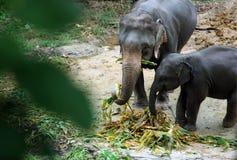 AZJA TAJLANDIA CHIANG słonia obóz Obrazy Royalty Free