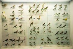 Azjata Chiny, Pekin, Krajowe Zwierzęce Museumï ¼ ŒAnimal próbki Obraz Stock