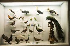 Azjata Chiny, Pekin, Krajowe Zwierzęce Museumï ¼ ŒAnimal próbki Zdjęcie Royalty Free