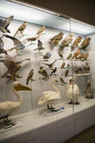 Azjata Chiny, Pekin, Krajowe Zwierzęce Museumï ¼ ŒAnimal próbki Zdjęcie Stock
