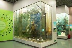 Azjata Chiny, Pekin, Pekin historia naturalna muzeum Zdjęcie Stock