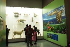 Azjata Chiny, Pekin, Pekin historia naturalna muzeum Obraz Royalty Free