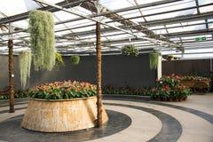 Azjata Chiny, Pekin widoku Uroczysty ogród kwitnie, szklarnia Fotografia Royalty Free