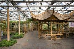 Azjata Chiny, Pekin widoku Uroczysty ogród kwitnie, szklarnia Obrazy Stock