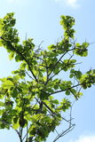 Azjata zieleni bagno Fotografia Royalty Free