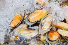 Azjata zielony musse Obrazy Stock