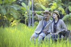 Azjatyccy rolnicy biorą opiekę ryżowa ilość w polu as well as zbiera produkt spożywczy fotografia stock