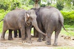 Azjatyccy słonie rodzinni Zdjęcie Stock