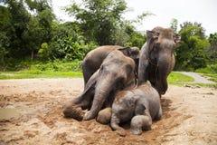 Azjatyccy słonie rodzinni Fotografia Royalty Free