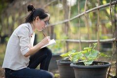 Azjatycka kobieta sprawdza organicznie ogórek, Surowy Organicznie Mini dziecko Zdjęcie Stock