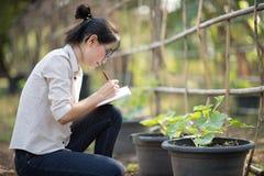 Azjatycka kobieta sprawdza organicznie ogórek, Surowy Organicznie Mini dziecko Obraz Stock