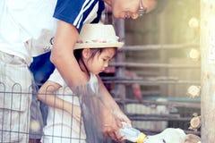 Azjatycka mała dziewczynka i ojciec karmimy mleko baranek Zdjęcie Stock