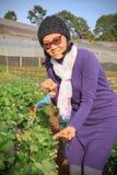 Azjatycka turystyczna kobieta harwesting świeże truskawki w agricultura Obrazy Stock