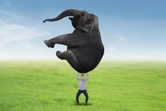 Azjatycki biznesmen podnosi słonia Fotografia Stock