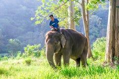 Azjatycki elephent w Thailand Fotografia Stock