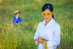 Azjatycki kobieta badacz monitoruje ilość ryż obrazy stock