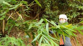 Azjatycki kobiety zrywania liść w lesie pakować ryżowego tort Obrazy Stock