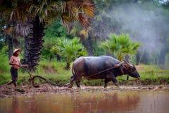Azjatycki mężczyzna używa bizonu orać dla ryżowej rośliny w dżdżystych morzach obraz stock