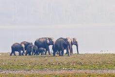 Azjatycki słoń obraz royalty free