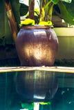 Azjatycki Zen stylu dekoraci puchar przy basenem z turkus wodą i odbicia w tropikalnym ogródzie z luksusowym tropikalnym ulistnie Obrazy Stock