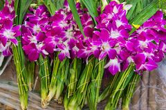 Azjatyckie fiołkowe orchidee Zdjęcia Royalty Free