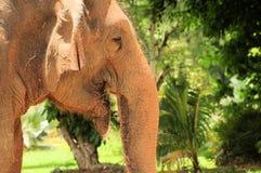 Szczęśliwy żeński Azjatycki słoń obrazy stock