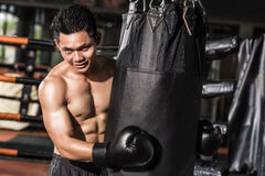 azjatykci bokser zdjęcia royalty free
