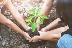 azjatykci dzieci zasadza małego drzewa z mater na ziemi Pojęcie g Zdjęcie Royalty Free