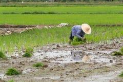 azjatykci rolnik Zdjęcie Stock