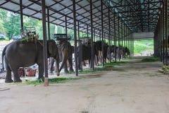 azjatykci słoni Chang Tajlandia słonia konserwaci centrum w T Zdjęcia Royalty Free