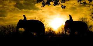 azjatykci słonia Obrazy Royalty Free