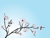 azjatykci tła kwiatu styl Obraz Royalty Free