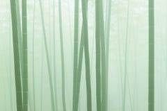 azjatykciej bambusowej mgły lasowa ranek pogoda Obraz Royalty Free