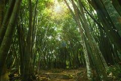 Azji Południowo Wschodniej dżungla Fotografia Royalty Free