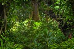 Azji Południowo Wschodniej dżungla Zdjęcia Stock
